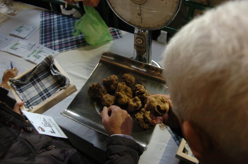 Selezione di tartufi bianchi a Moncalvo