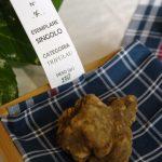 Un tartufo bianco da 270 grammi