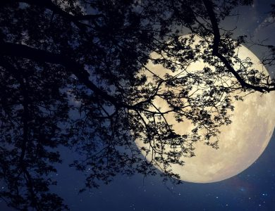 La luna e i tartufi