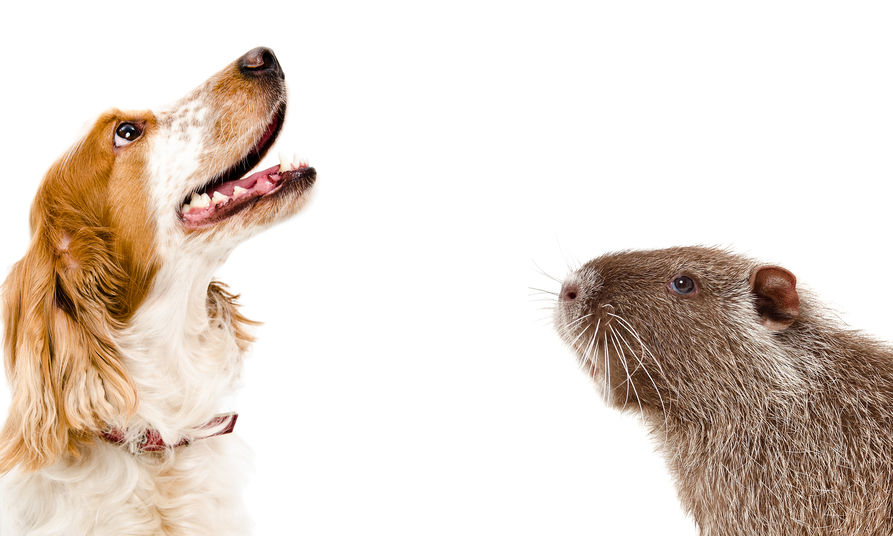 gli attacchi della nutria al cane e all'uomo
